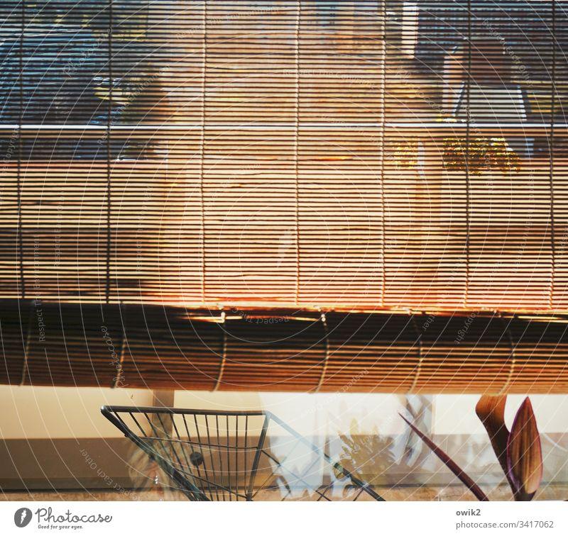 Diskrete Blicke Jalousie Bambusrollo Rollo Fenster Glas Fensterscheibe Durchblick Aussicht Detail Detailaufnahme Lamellen dünn durchsichtig durchscheinend