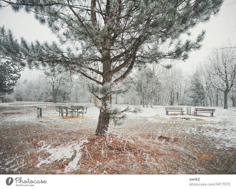 Winterpark draußen Außenaufnahme kalt Eis Schnee Baum Nadelbaum vereist Eiskristalle Landschaft Natur Bänke Parkbänke Bäume Wald Papierkorb Holz Metall Himmel