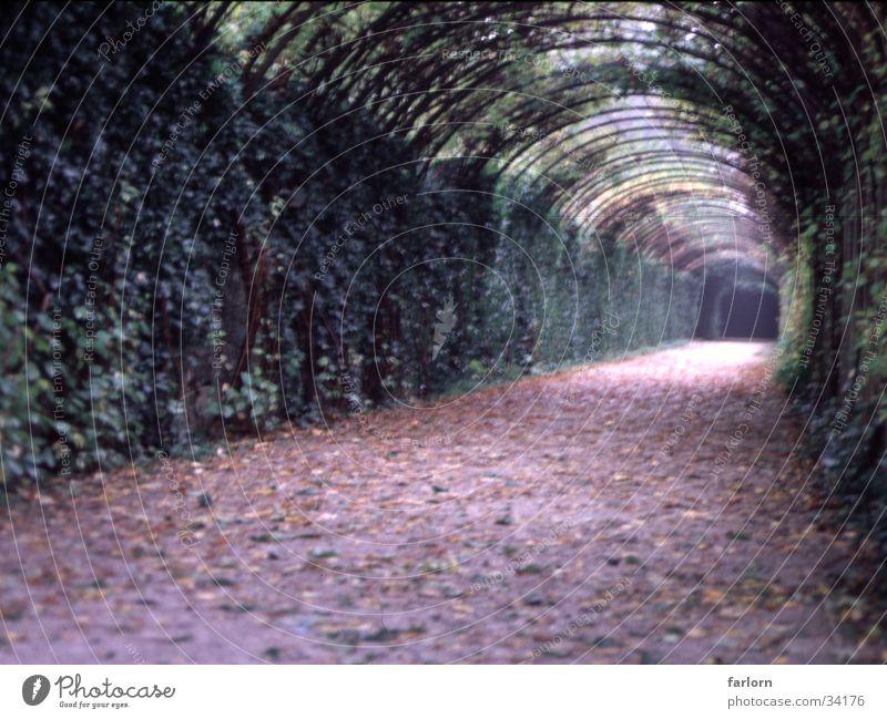 grüner_weg grün Blatt Wege & Pfade Park tief Bogen
