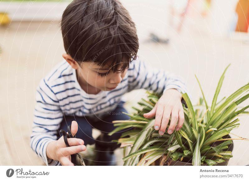 Kleiner Junge beschneidet Blumentopf zu Hause als Gärtner Kind Beschneidung 3-4 Jahre alt 4-5 Jahre alt Kinder geschnitten heimwärts Gartenarbeit Pflanzen patio