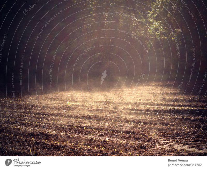 Morgendunst Erde Frühling Schönes Wetter Pflanze Nutzpflanze Feld Wald Wachstum nass natürlich braun grün Optimismus Beginn anstrengen Erwartung Leben