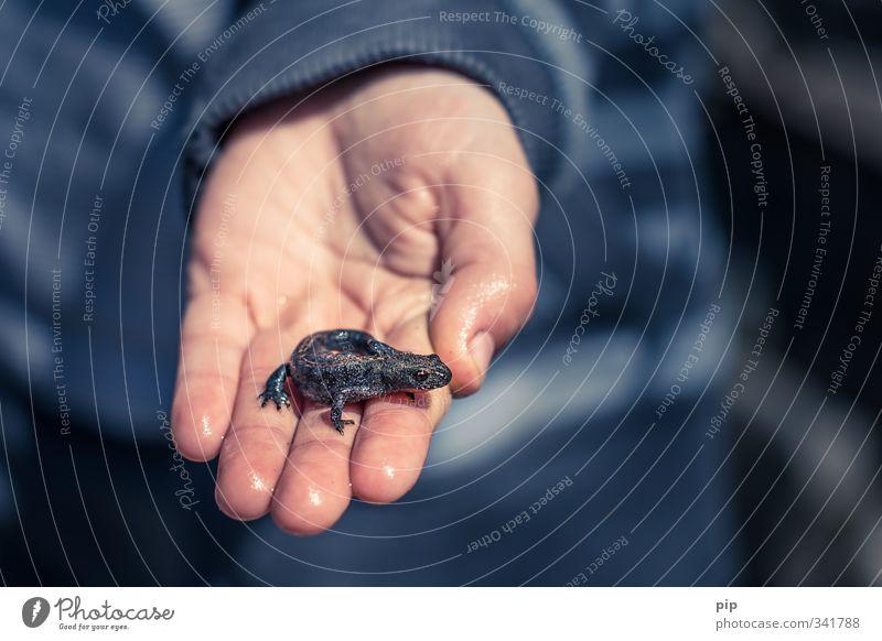 drachenzähmen für anfänger Mensch Kind Hand Finger 1 Wildtier Molch Echsen Lurch Tier Tierjunges Blick Ekel klein nass niedlich wild grau Kindheit Natur