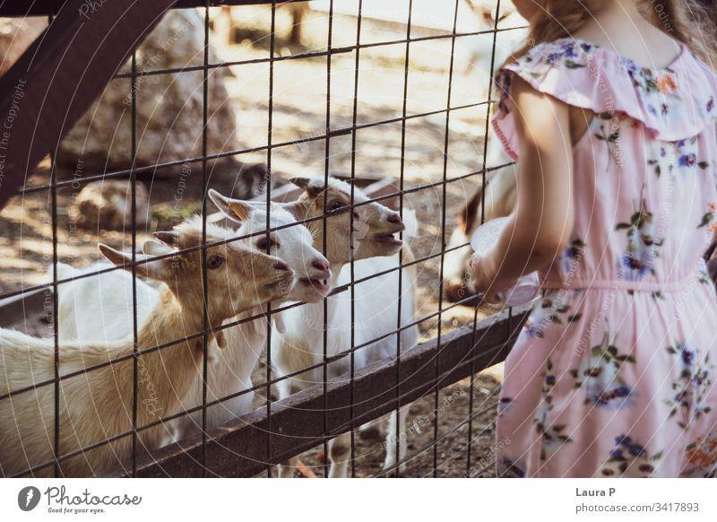 Kleines Mädchen auf dem Bauernhof, Ziegen füttern Aktivität bezaubernd Tier Tiere schön Schönheit Pflege Kind Kindheit schließen Land Landschaft niedlich