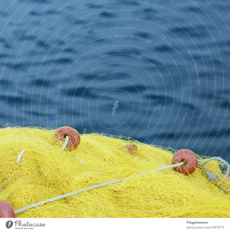 Neuer Tag neues Glück Wasser Meer Essen Lebensmittel Ernährung Fisch Nordsee Ostsee Mut Angeln Fischereiwirtschaft Mittagessen Angler Fischerboot