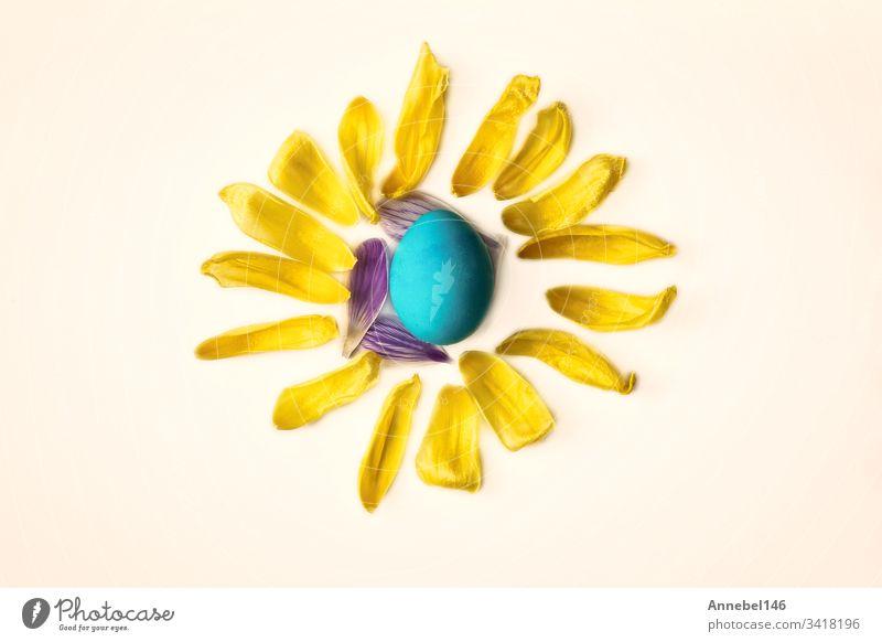 Blaues Osterei, umgeben von gelben Blütenblättern, Form einer Sonne isoliert auf weißem Hintergrund, Oster- oder Frühlingskonzept Ostern vereinzelt blau Blume