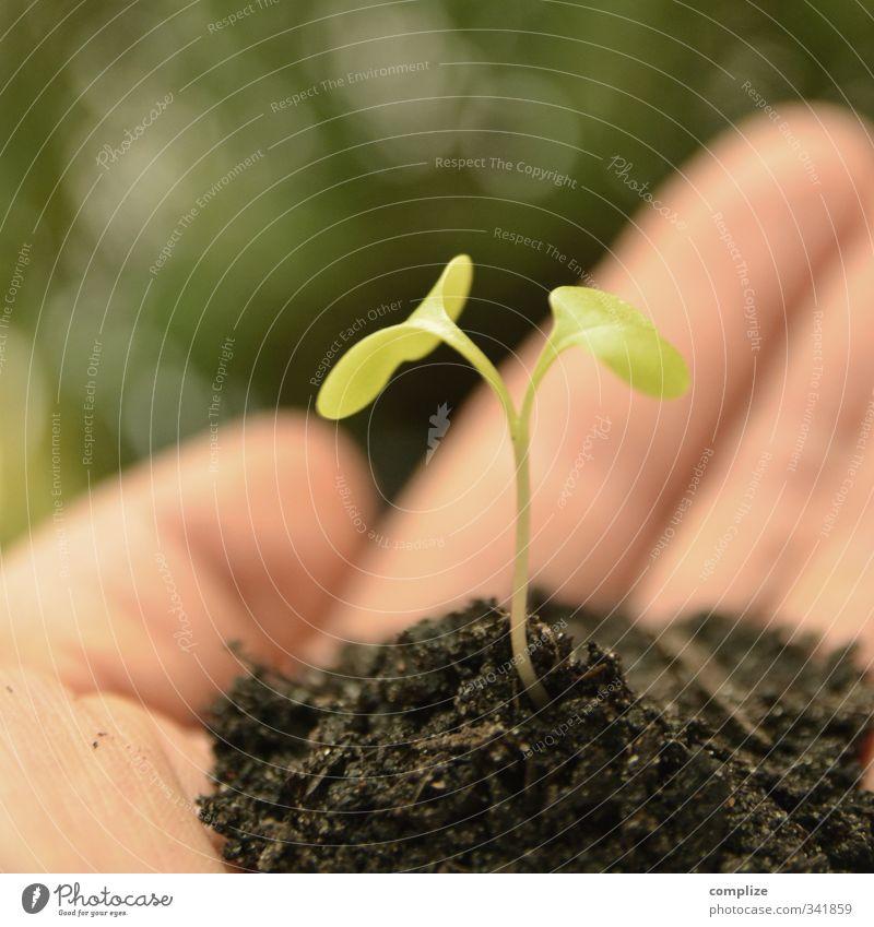 Kleine Pflanze Traumhaus Garten Baum Blume Grünpflanze Wasser Wachstum einzigartig innovativ Inspiration Zukunft Zusammenhalt Hand Schutz Samen keimen Umwelt