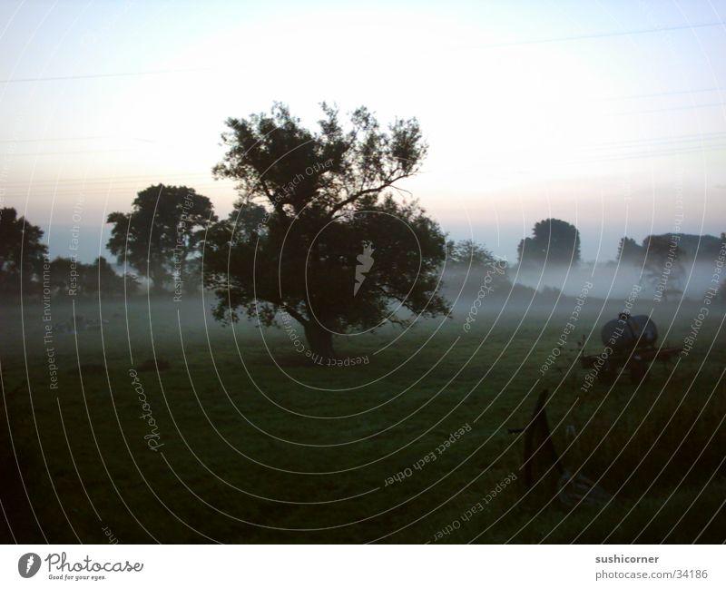 sushithree Baum Nebel frisch Viehweide
