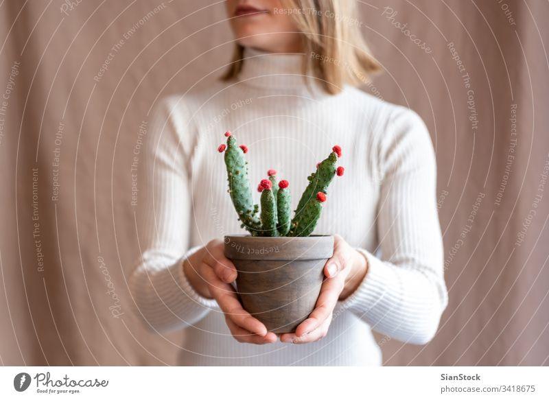 Frau hält einen Kaktus-Topf Blume Beteiligung Halt Hände Pflanze Blumenhändler Geschenk geblümt im Innenbereich zeigen Lippen Mund Hintergrund Person Blütezeit