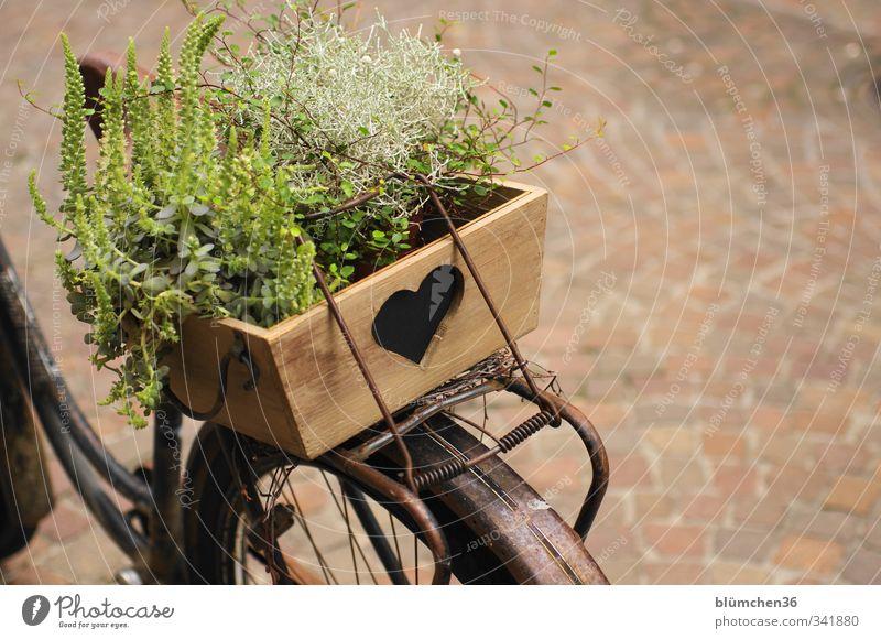 Fahrrad mit Herz Verkehr Verkehrsmittel fahren stehen alt einfach einzigartig braun Dekoration & Verzierung Holz Holzkiste herzförmig Pflanze retro Retro-Farben