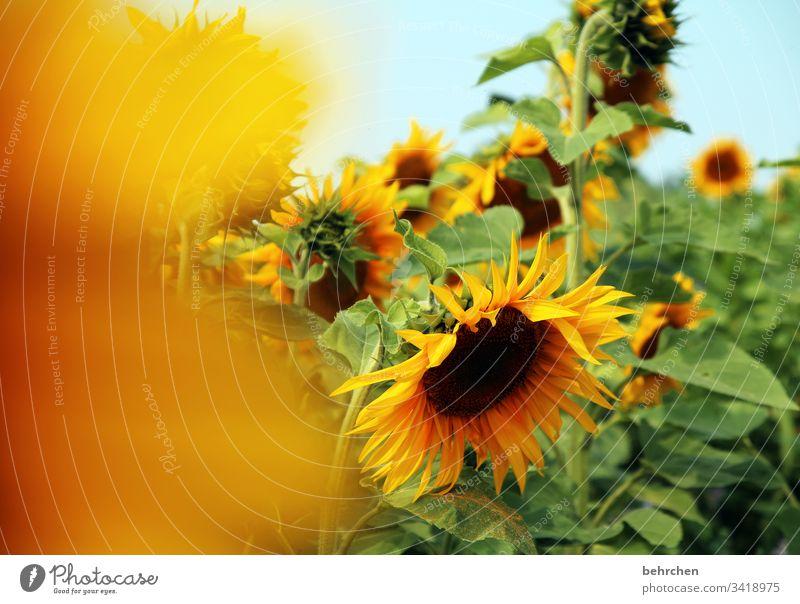 leuchtender sonn(en)tag Umwelt Sonnenlicht Unschärfe Kontrast Licht Tag Menschenleer Detailaufnahme Nahaufnahme Außenaufnahme Farbfoto Hoffnung Schönes Wetter