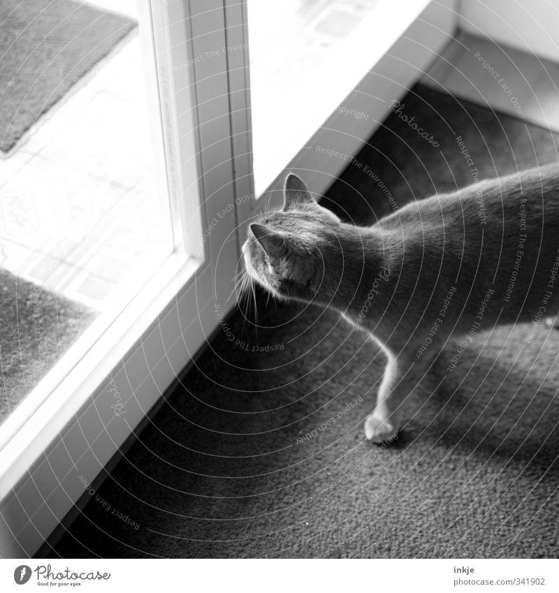 das Leben da draussen... Häusliches Leben Wohnung Terrasse Fenster Tür Tier Haustier Katze Hauskatze 1 beobachten Blick Neugier Interesse Innerhalb (Position)