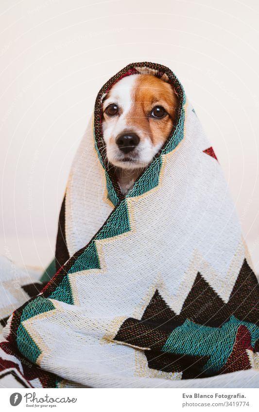 süßer Jack-Russell-Hund, der mit einer ethnischen Decke bedeckt ist und zu Hause auf dem Bett sitzt. Lebensstil im Haus jack russell Haustier Deckung heimwärts