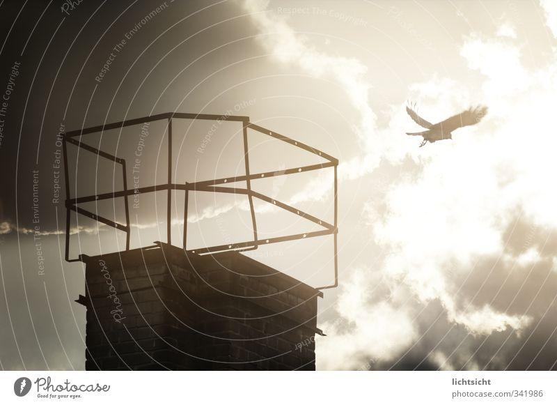 The Crow Himmel Tier Wolken schwarz dunkel grau Vogel Wetter fliegen Schönes Wetter Beginn Flügel Flugzeugstart gruselig Backstein Abheben