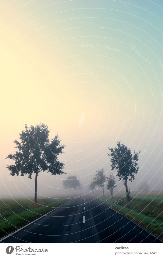 Fog - Nebel des Grauens Herbst Allee Straße Bäume Symmetrie Linien Zentralperspektive Ungewissheit Angst Existenzangst Baum Landschaft Wege & Pfade Natur Licht