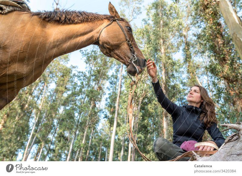 Eine junge Frau im Schneidersitz hält die Hand an die Nüstern ihres Pferdes aus der Froschperspektive. Tier Nutztier Junge Frau Natur Tierliebe Freundschaft