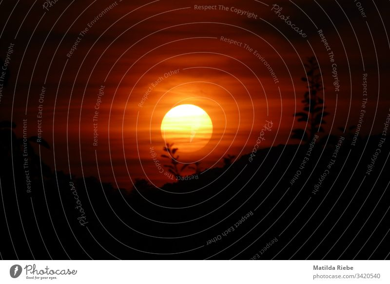 Sonnenuntergang Sonnenlicht Abend Himmel Silhouette Schatten Farbfoto Gegenlicht Natur Kontrast Lichterscheinung Pflanze dunkel rot orange nah Außenaufnahme