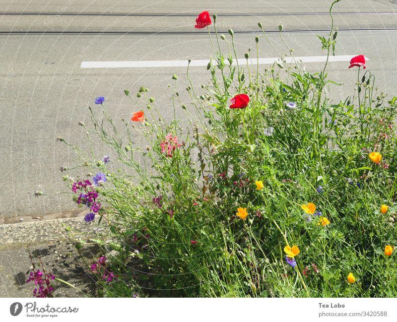 Blumen auf dem Bürgersteig Blüte Frühling Pflanze Natur Großstadt Außenaufnahme Frühlingsblume Garten Frühblüher Tag Blühend Froschperspektive grün Farbfoto