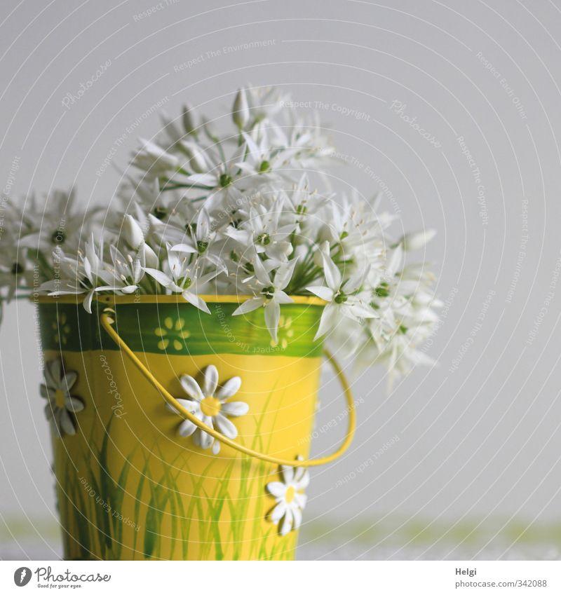 Blümchen... Natur grün schön weiß Pflanze Blume gelb Frühling Blüte natürlich Metall Idylle Ordnung Häusliches Leben stehen frisch