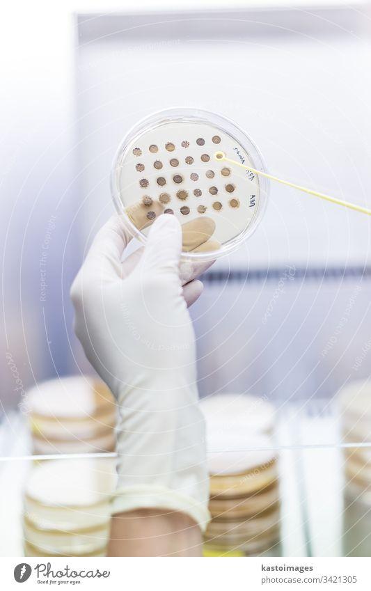 Wissenschaftlerin, die in der Forschungseinrichtung des Labors für die Entwicklung von Koronaviren-Impfstoffen mit Laminarströmung arbeitet. forschen