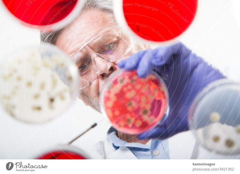 Senior-Lebenswissenschaftlerin, die Bakterien veredelt. Wissenschaft forschen Labor Forscher Experiment Genetik Detailaufnahme Technik & Technologie Speise