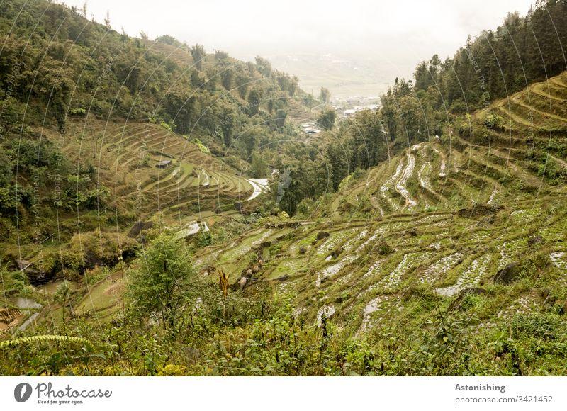 Reisfelder bei Sapa, Vietnam Ackerbau Ausflug Reisterrasse Reisterrassen Außenaufnahme Ferien & Urlaub & Reisen sa pa Asien Natur Landschaft Berge u. Gebirge