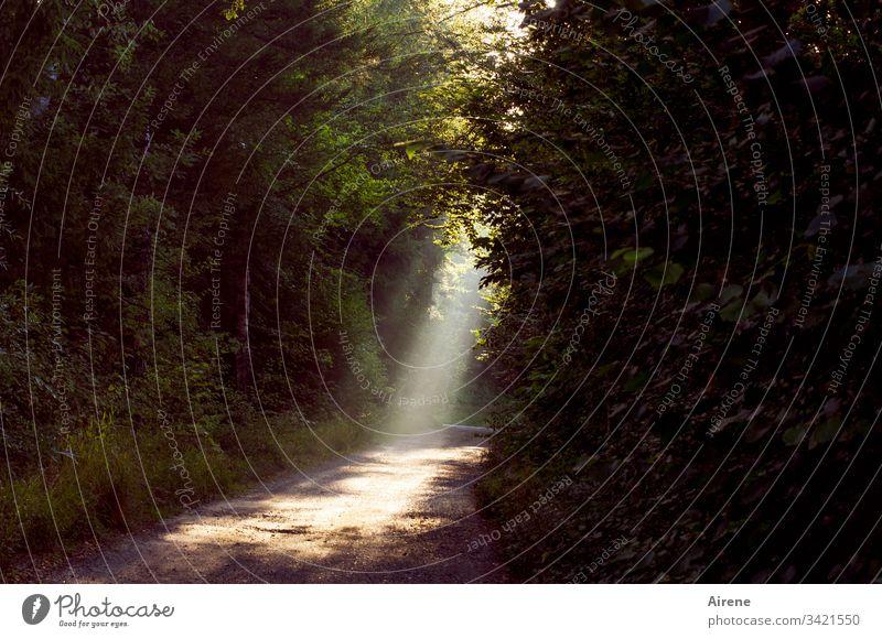 Licht auf schmalem Pfad Lichterscheinung Wege & Pfade Wald leuchten Fußweg Spazierweg Gegenlicht natürlich Meditation Einsamkeit Erholung Natur Sehnsucht