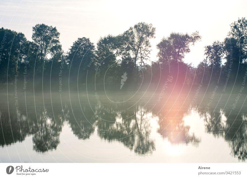 Inn(en)ansicht Spiegelung im Wasser früh Morgen Inntal Fluss Morgennebel neblig Morgenstimmung Nebel Sonnenlicht Wald Einsamkeit Wasserspiegel Teich