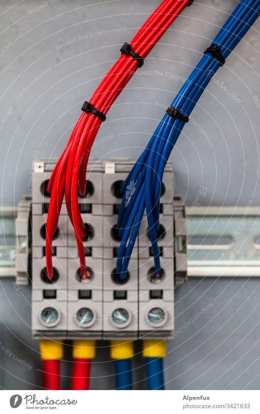 exponentielle Vervielfältigung (gebündelt) Kabel Elektrizität blau Technik & Technologie Elektrisches Gerät rot Kraft Energiewirtschaft Leitung Verbindung