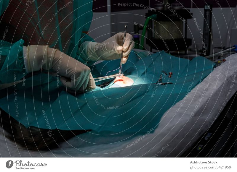 Professioneller Tierarzt während der Operation in der Klinik Veterinär Chirurgie Hilfsbereitschaft Pflege Maul Werkzeug vorbereiten steril Gerät Mundschutz