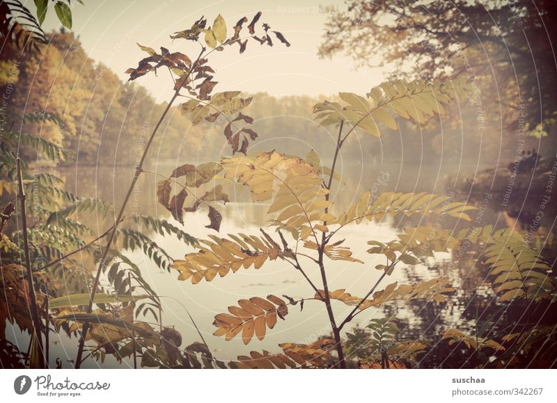 idyll am bärensee Umwelt Natur Landschaft Pflanze Wasser Himmel Wolkenloser Himmel Herbst Wetter Schönes Wetter Baum Sträucher Seeufer Stimmung Warmherzigkeit