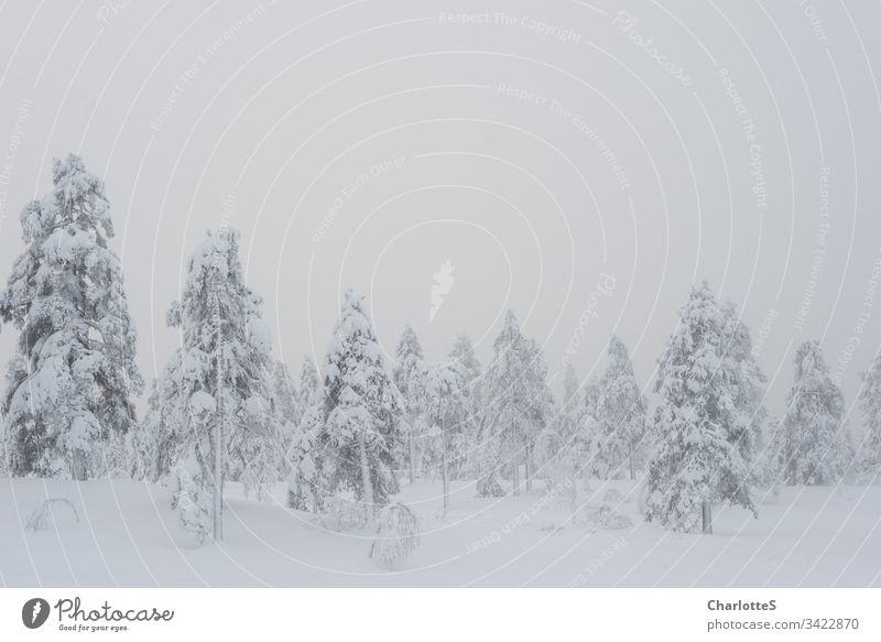 Ein bepuderter norwegischer Wald auf einer Bergspitze. Schnee Winter Birke Nebel Aussicht Ausblick Norwegen leer natürlich Natur kalt Windstille Schneefall