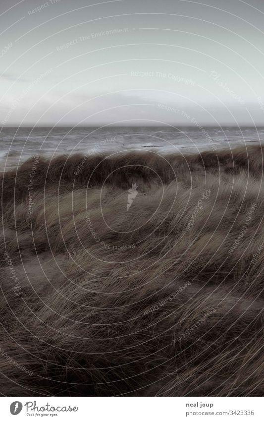 Dünengras und Meereshorizont bei Sturm Nordsee Küste düster Herbst wandern Außenaufnahme Landschaft wild Melancholie windig grau Klima