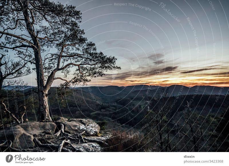 Abendlicher Ausblick vom Krappenfels Felsen Stein Berge u. Gebirge Landschaft Natur Außenaufnahme Felswand Felsformation Pfälzerwald Elsass wandern Umwelt
