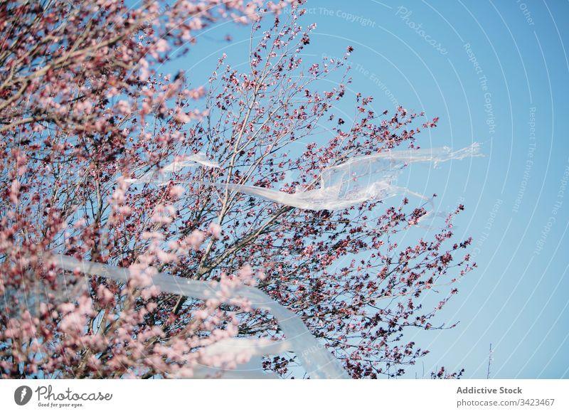 Durchsichtiges Kunststoffmaterial flattert auf blühendem Baum Ökologie verunreinigen Konzept Blütezeit Frühling Himmel wolkenlos durchsichtig Ast Blume Umwelt