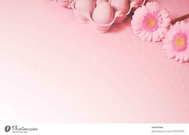 rosa ostereier im karton und rosa blümchen auf rosa hintergrund mit verlauf Ostern Ostereier gekochte Eier bunte Eier Eierkarton Blumen Blüte Astern
