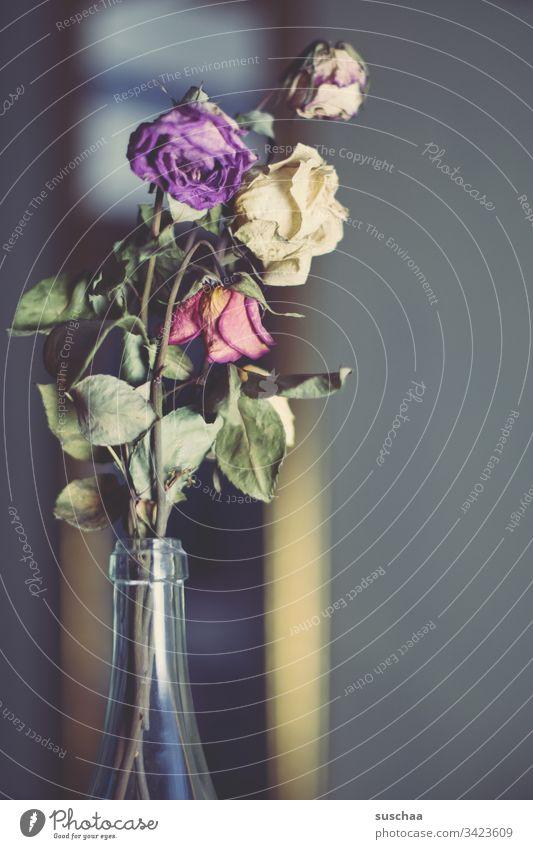 vertrockneter strauß rosen in einer glasflasche mit unscharfem hintergrund Rosen Vergänglichkeit Dornen Rosenblätter verdorrt Trockenblumen Blätter Romantik