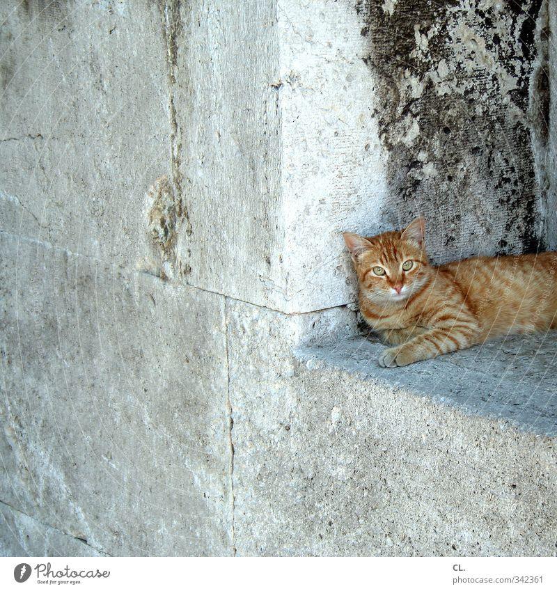 istanbuler katz Stadt Mauer Wand Fenster Tier Katze Tiergesicht Fell Pfote 1 beobachten Erholung sitzen Neugier Tierliebe Wachsamkeit ruhig Mittagsschlaf