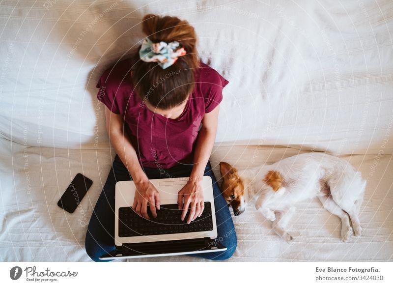 junge Frau, die zu Hause am Laptop arbeitet, auf der Couch sitzt, daneben ein süßer kleiner Hund. Technik und Haustierkonzept arbeiten heimwärts jack russell