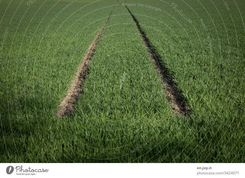 Fahrspur in einem bepflanzten grünen Feld Acker Spug Agrar Klima Pflanzen Gras Rasen Weizen Gräser Traktorspur Wachstum Lebensmittel Natur Landwirtschaft
