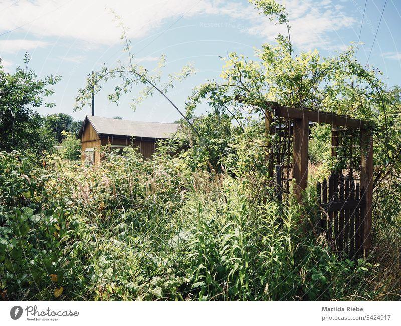 verwilderter Garten Wildpflanzen Pflanze Tür Haus Schuppen Gartentor Wiese Pflanzenteile verwachsen Natur Sommer Sträucher Gras Tor Menschenleer Grünpflanze