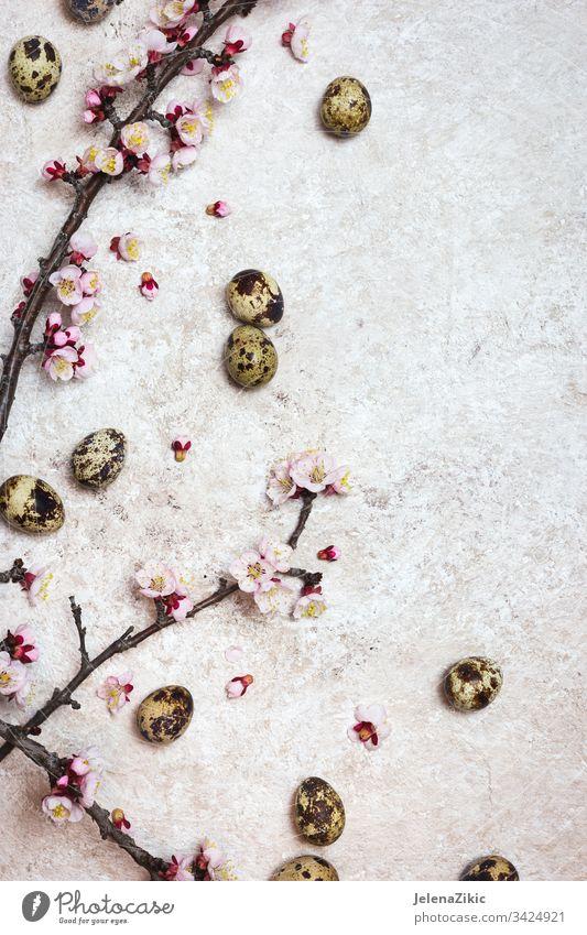Frühlings- oder Ostergrenzenhintergrund Blüte Blume Blütezeit Ast Saison Pflanze weiß Kirsche Dekoration & Verzierung rosa Flora bedeckt dekorieren Blütenblatt