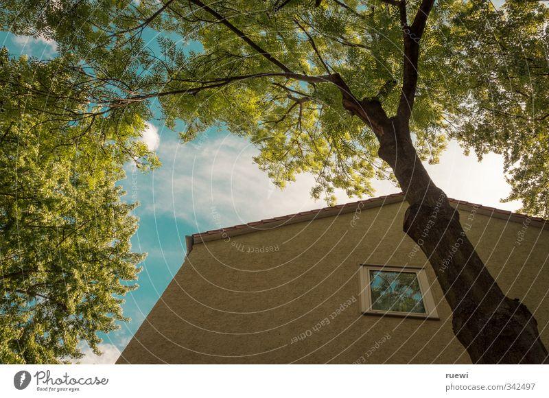 ...mit Blick ins Grüne Himmel Natur blau grün Stadt Pflanze Sommer Baum Sonne Wolken Blatt Haus Umwelt gelb Fenster Frühling