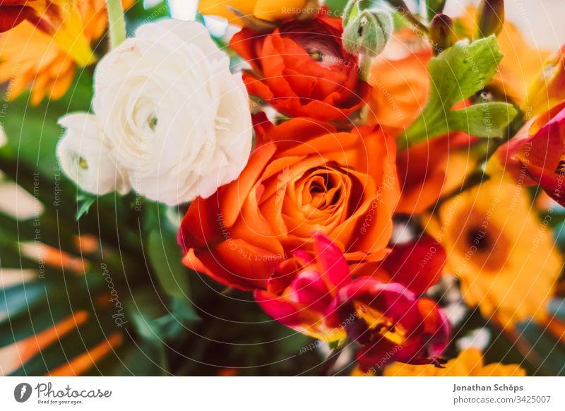 Draufsicht auf einen bunten Blumenstrauß mit Gerbara, Freesien, Rosen und Rosa Damascena in Nahaufnahme Blütezeit Blumenschmuck Hintergrund schön Schönheit