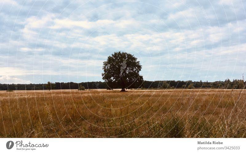 Einsamer Baum steht inmitten eines Feldes Natur Ferne ruhig Landschaft Idylle Wolken Menschenleer Außenaufnahme Umwelt Ausflug Sommer Himmel Wiese Freiheit