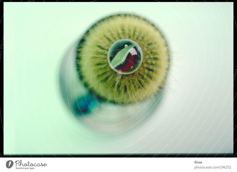 Iris Kaktus Kiwi grün obskur Regenbogenhaut Glasmurmel Auge