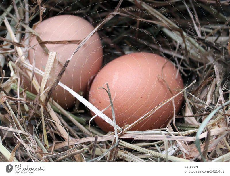 Zwei Hühnereier im Nest Ei Huhn Ostern Stroh Frühling Osternest Natur Farbfoto Osterei Nahaufnahme Lebensmittel Feste & Feiern Ernährung Menschenleer Osterfest