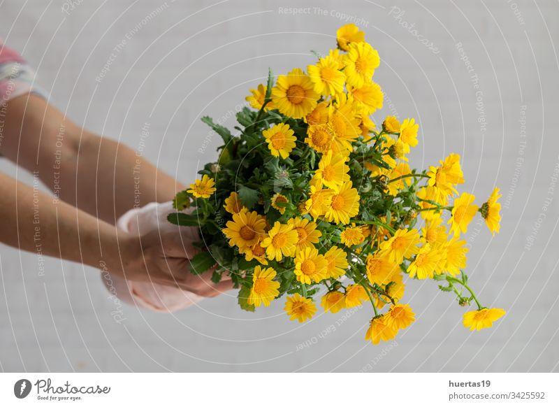 Frauenhände mit Blumenstrauß aus frischen Frühlingsblumen Hintergrund Hände Postkarte Blütenblätter Valentinsgruß Jahrestag gelb Feier Liebe Romantik natürlich