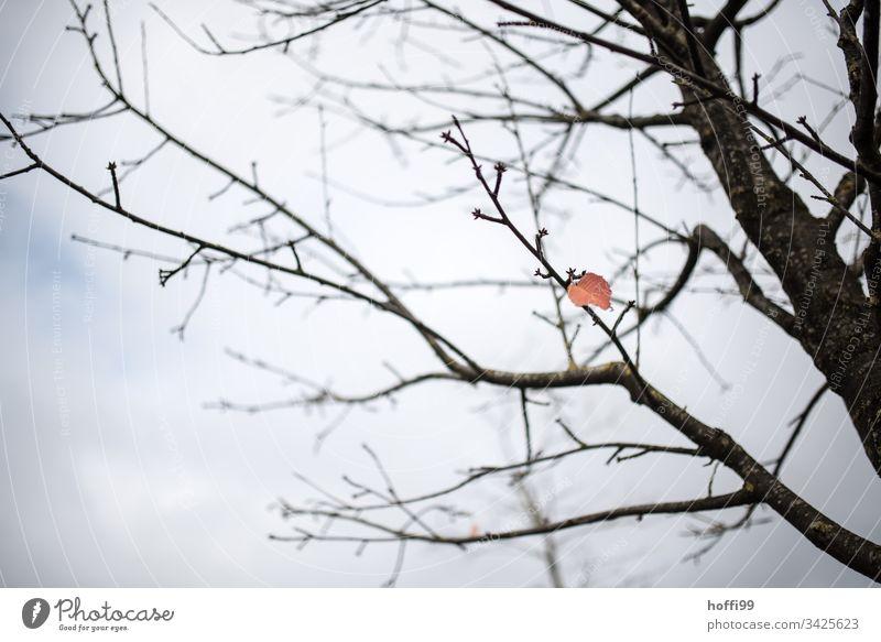 das letzte Blatt am Baum - der Letzte macht das Licht aus. Nebel Pflanze Ast stumm Zweig ästhetisch hell schlechtes Wetter Wasser kalt natürlich dünn trist
