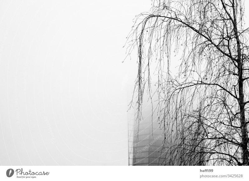 traurige Birke im Nebel vor verschleiertem Hochhaus Baum hängende äste Nebelschleier Nebelwand Nebelstimmung Hochhaus in Wolken weiß weißer Hintergrund