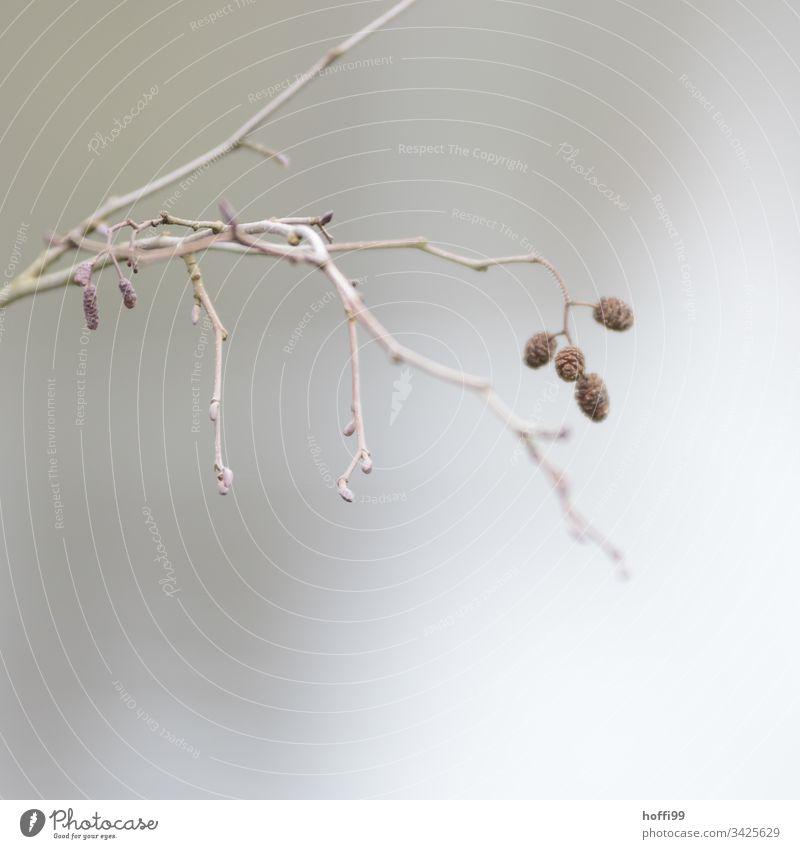 Zweig im Nebel Pflanze Ast Stille Baum Blatt ästhetisch hell schlechtes Wetter Wasser kalt natürlich dünn trist Einsamkeit Zweige u. Äste Blüte Blütenknospen
